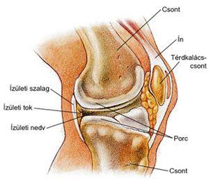 tejbogáncs ízületi fájdalmak kezelésére fájdalom a váll ízületeiben edzés után