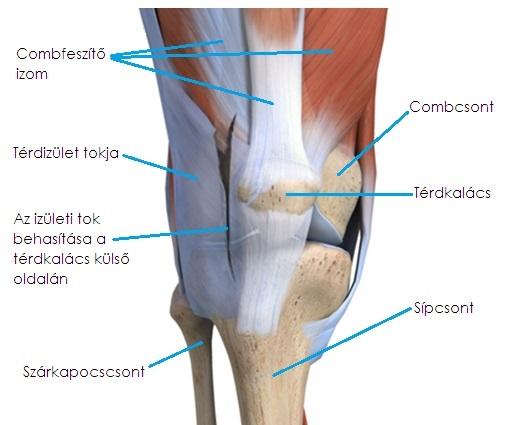 a csontok és az ízületek megsérülnek a mérgezés során leukémia ízületi fájdalom