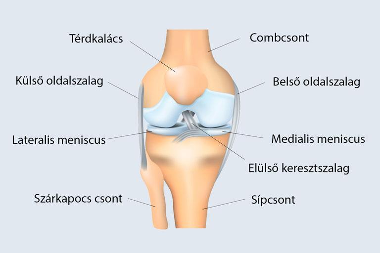 hogyan kell kezelni a csípő sérülést ízületi gyulladás vagy lábízületi kezelés