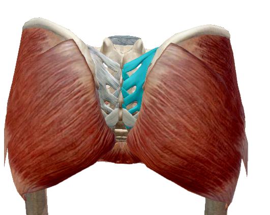 nyaki osteochondrozis krém