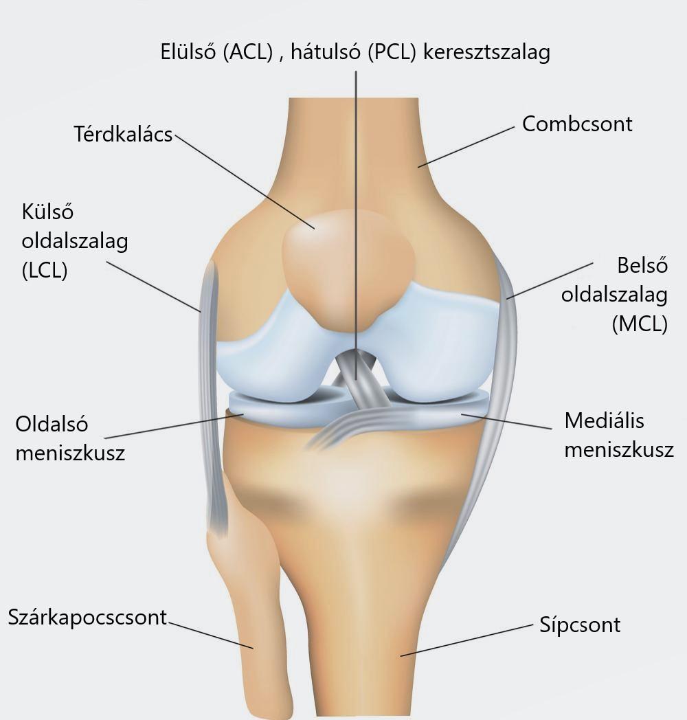 a bal térdízület ízületi gyulladása mi ez máj- és ízületi fájdalmak