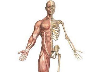 emberi csont- és ízületi betegségek