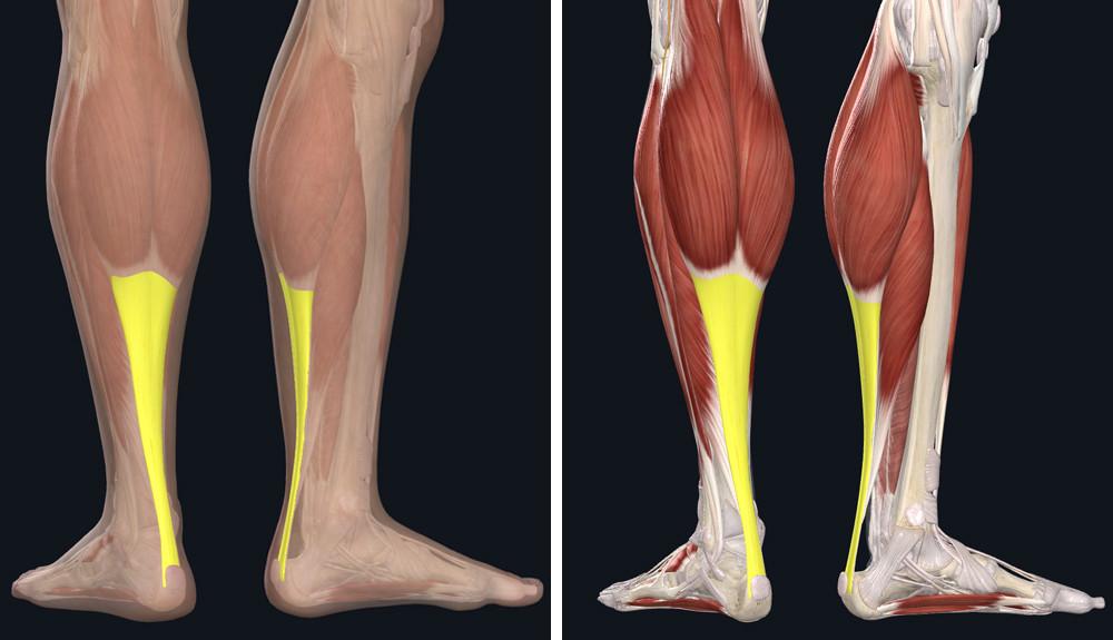 izomfájdalom a lábak ízületeiben ízületek fájnak és a test viszket