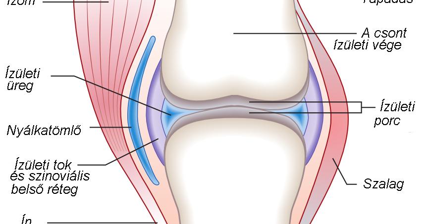 a bal térdízület deformáló artrózisa 2 fokkal