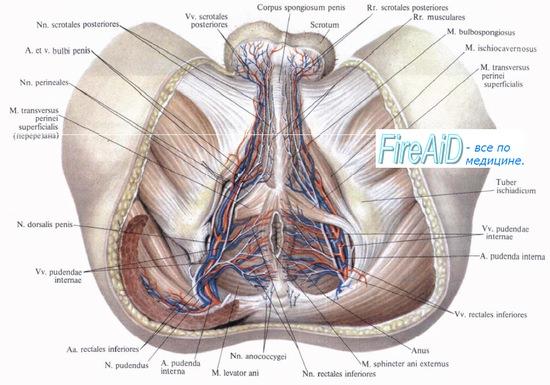 göndör csípőízület mi az első fokú térdízület ízületi gyulladása