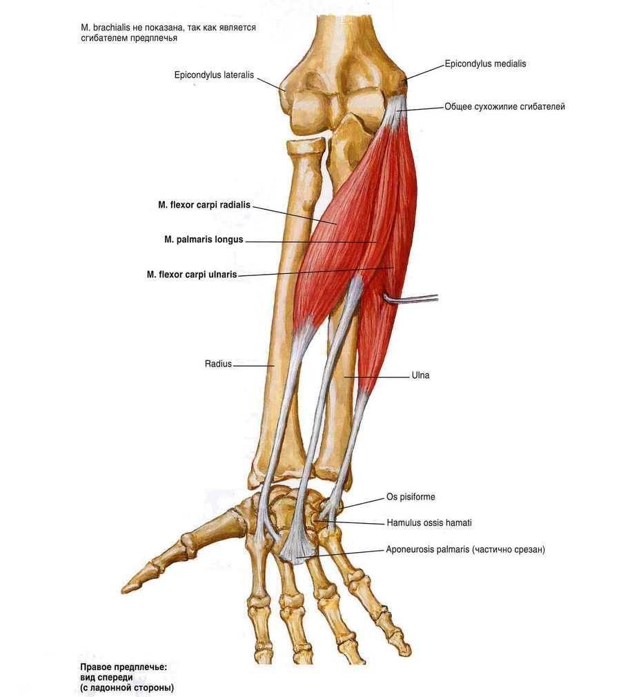 miért fáj a csípőízület séta után a térdízület külső oldalsó ágának részleges károsodása