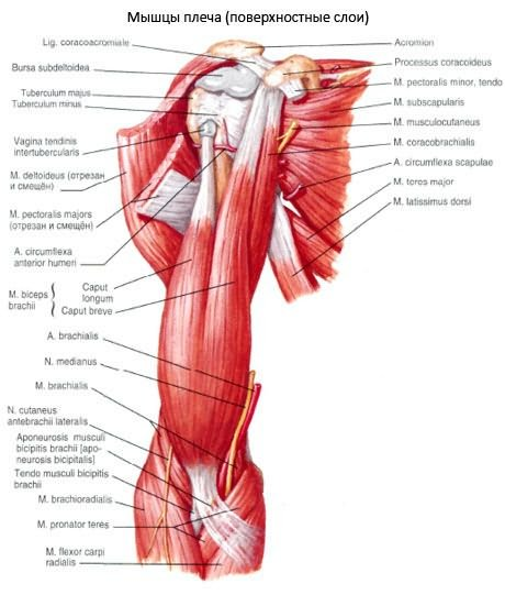 a metakarpofalangeális ízület kapszula károsodása hogyan lehet elkerülni az ízületi sérüléseket