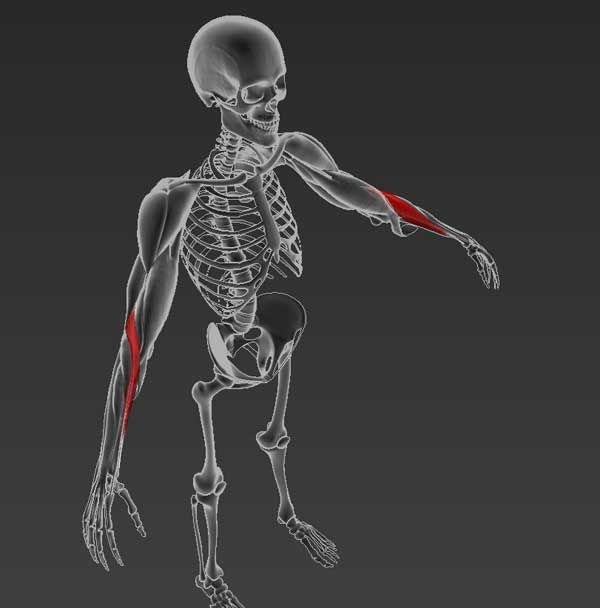a keresztirányú fasciális ízületek tünetei csontritkulás térdízület kezelése