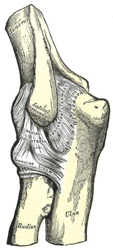 fáj a könyökízület kötszer az ízületi gyulladást
