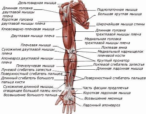 az íves ízületek artrózisának kezdeti megnyilvánulásai ízületi betegségben szenvednek