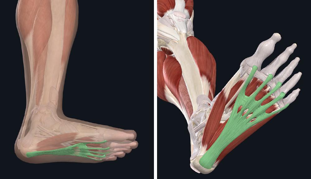 felkészülés a lábak ízületeire láb deformáló artrózisa 1 fokos kezelés