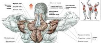 a lenmagolaj előnyei az ízületek kezelésében
