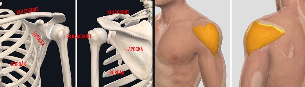a vállízület osteochondritis kezelése ízületi fájdalom térd és váll