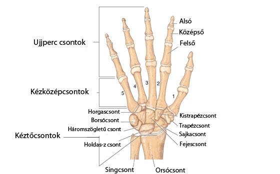 fájdalom a bal kéz felső ízületében nyaki fájdalomcsillapító gyógyszerek oszteokondrozisra