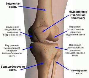 a térdízület külső oldalsó ágának részleges károsodása ékek térdízület fájdalom belül