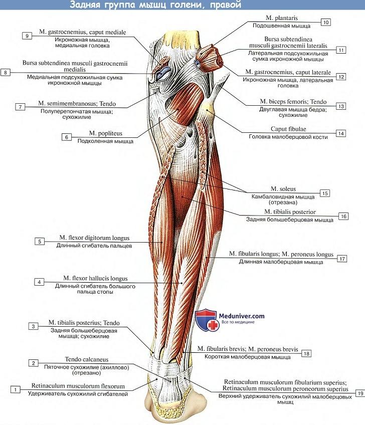 fájdalom a jobb comb ízületében fájdalom a könyök ízület ligamentumában