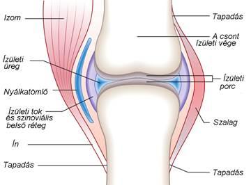 az ízületi betegségekről ízületi fájdalmak artrózisos ízületi gyulladás esetén