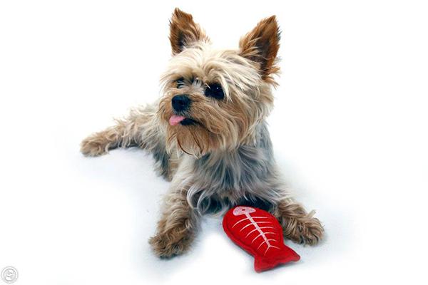izületi fájdalom csillapítása kutyáknál ízületi fájdalom ingadozása