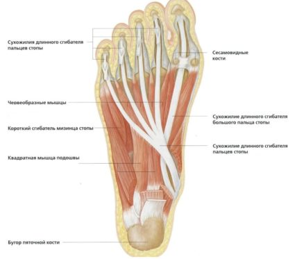 miért fáj az ujjak falának ízületei