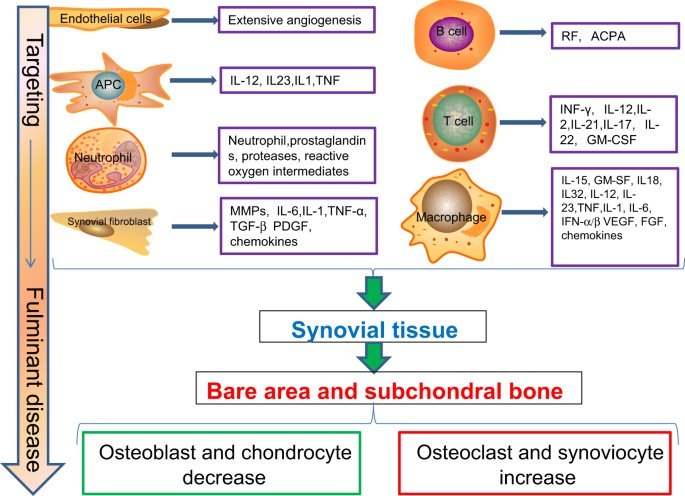 rheumatoid arthritis pathogenesis pubmed ízületi problémák a tacskókban