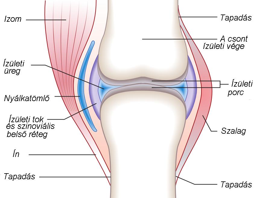 ízületi fájdalmak artrózisos ízületi gyulladás esetén
