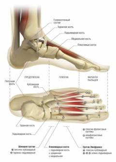 a lábak ízületeinek betegségei térdgélek miért fáj a vállak ízületei